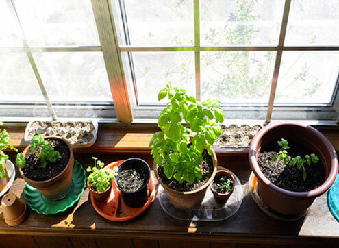 Potted plants on the windowsill