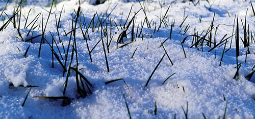 It is best to avoid walking on wet or snow-covered grass
