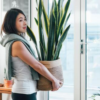 woman holding houseplant in home among other indoor plants