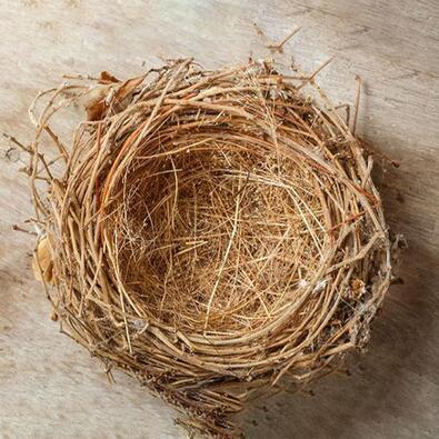 empty birds nest sitting on a piece of wood